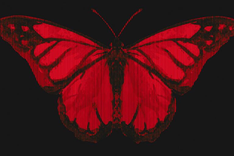butterflies-IMG-GALERIA